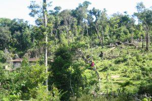 Nghiên cứu thực trạng và đề xuất một số giải pháp nhằm nâng cao hiệu quả của việc thực hiện chính sách chi trả dịch vụ môi trường rừng tại xã Mường Nhé,  huyện Mường Nhé, tỉnh Điện Biên