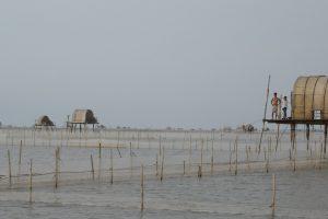 Hệ sinh thái ven biển