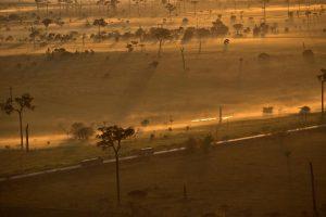 Nạn phá rừng ở Brazil, có thể là do Tổng thống Bolsonaro, cũng có thể là do Trung Quốc