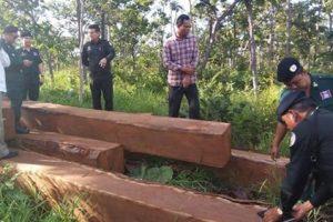 Việt Nam tiếp tục bị cáo buộc tiêu thụ gỗ bất hợp pháp từ Campuchia
