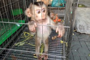 Nghiên cứu thực trạng buôn bán động vật hoang dã tại vùng đệm Vườn Quốc gia Pù Mát: Nghiên cứu điển hình tại thôn Cao Vều, xã Phúc Sơn, huyện Anh Sơn, tỉnh Nghệ An