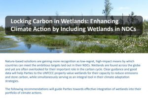 Locking Carbon in Wetlands: Enhancing Climate Action by Including Wetlands in NDCs